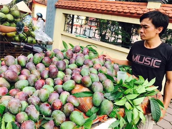 """Xoài """"lạ"""" vỏtím được bán tràn lan ở Hà Nội. Ảnh: Internet"""