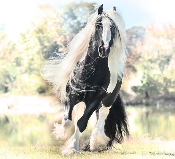 Những con ngựa xinh đẹp như thế này có thể mang về cho chủ chúng hàng chục ngàn đô la.