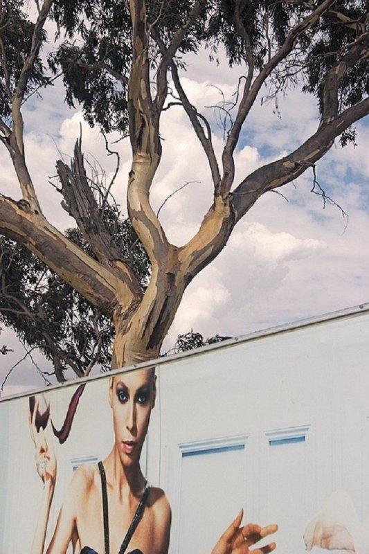 """Nghe đồn """"tóc cây"""" đang là mốt. (Ảnh: Internet)"""