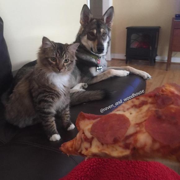 Chúng cùng ăn…