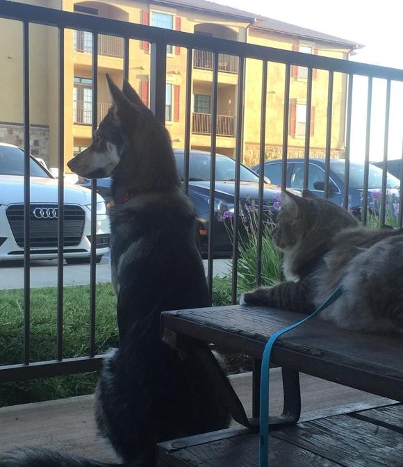 Có người bạn to lớn bảo vệ, Woodhouse dần trở nên dạn dĩ, thậm chí còn rượt đuổi bọn chó nghịch đến la lối ồn ào trước nhà.