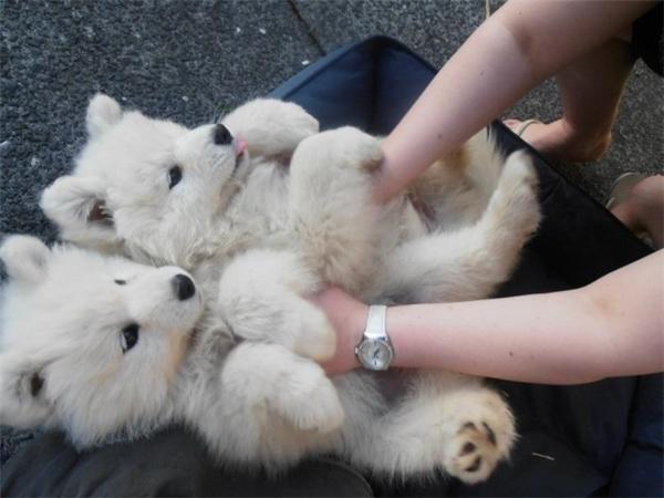 Khi còn nhỏ trông chúng chẳng khác gì gấu bông thế này đây. (Ảnh: reddit.com)