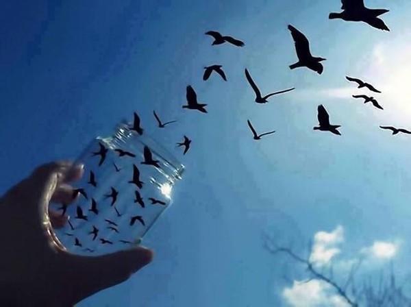 Ước mơ làm chủ cả bầu trời. (Ảnh: Internet)