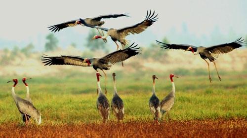 Vườn quốc gia - Ngỡ ngàng trước top 5 vườn quốc gia lớn nhất Việt Nam hấp dẫn du khách