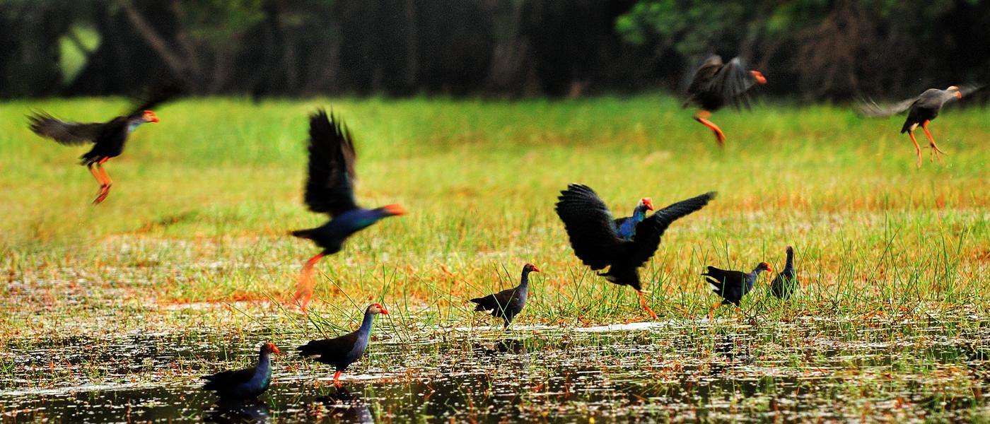 Vườn quốc gia - Về Đồng Tháp khám phá vườn quốc gia Tràm Chim lớn nhất Việt Nam