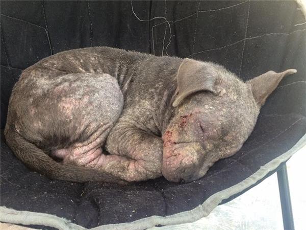 Tội nghiệp chú chó ghẻ lở bị bỏ rơi bên ngoài cửa hàng