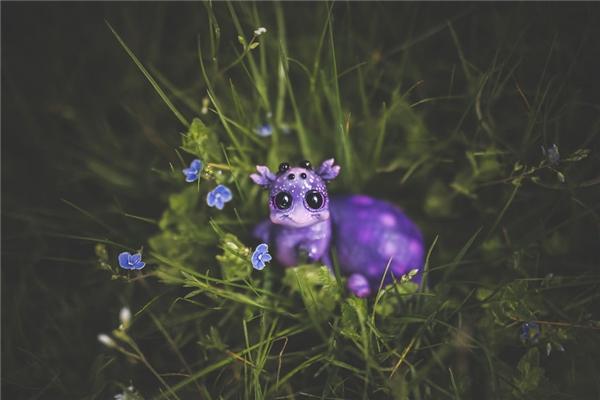 Con ốc màu tím mơ mộng... Mặt mũi cũng xinh xắn đáng yêu đúng không?(Ảnhkatyushka)