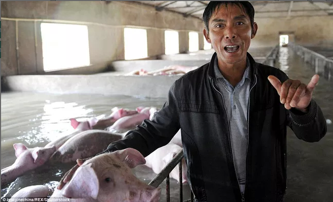 Ông hi vọng sẽ nhận được hỗ trợ từ nhà nước và có thểbán những chú lợn đã chết cho một công ty chế biến.