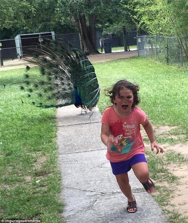 Bạn đã quên rồi chăng cô bé 5 tuổi bị công rượt chạy trối chết rồi còn bị chế ảnh trên mạng? (Ảnh: Imgur)