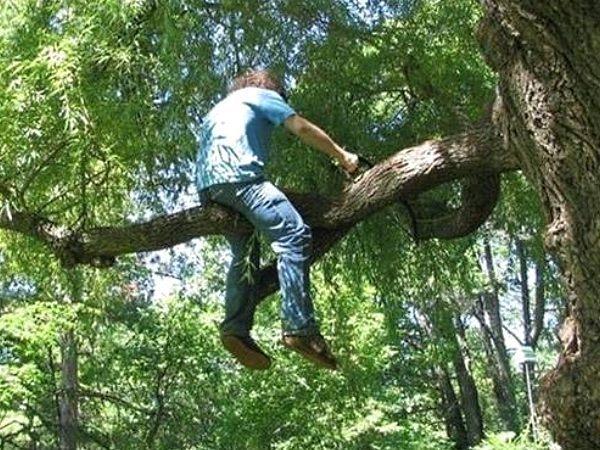 Cưa cây mà ngồi thế này khỏi mất công trèo thang xuống làm gì cho mỏi chân nhỉ?