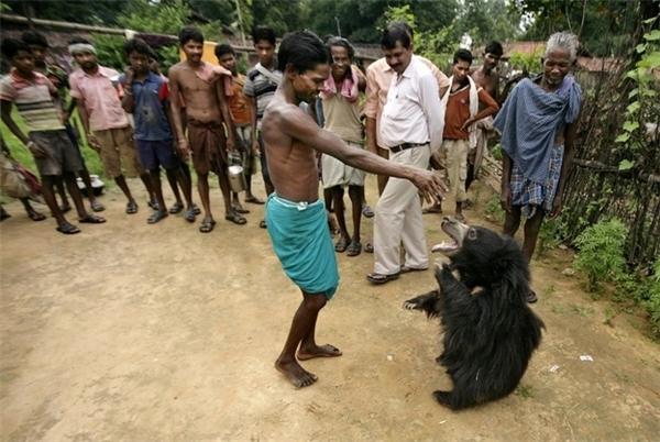 Buddu rất thích chơi đùa cùng những người trong gia đình và cả trong làng chứ không hề tỏ ra hung hãn, đe dọa.