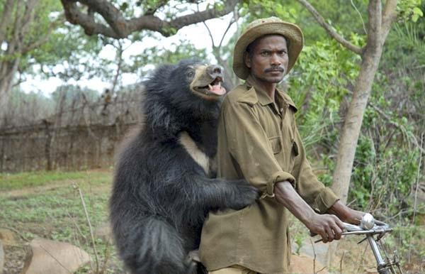 Chú gấu thân thiện cũng không hề tỏ dấu hiệu muốn bỏ đi nên nó được giữ lại và được đặt cho cái tên Buddu.