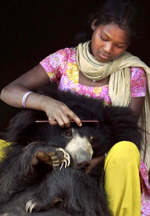 Nó còn ngoan ngoãn ngồi yên để cô chủ chải lông cho nữa.