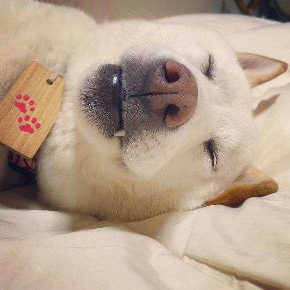 Có điều chẳng mấy khi nàng ta di động vì nhiệm vụ cao cả và lớn lao nhất đời của nàng đó là ngủ.