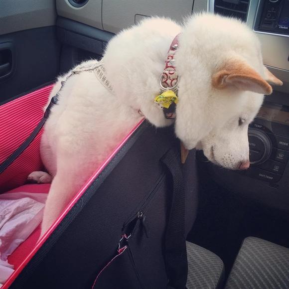 …lúc đang đợi trong xe…