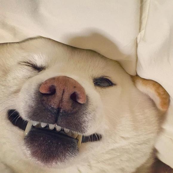 Nàng ngủ cả lúc đang cười…