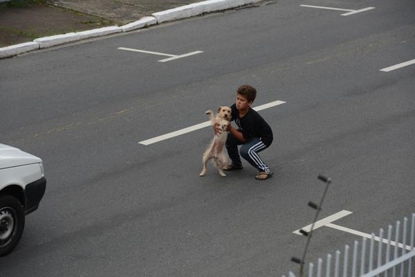 Cậu bé 11 tuổi người Brazil có tên Fernandes đã lao ra đường để cứu một chú chó khỏi bị xe đâm phải.