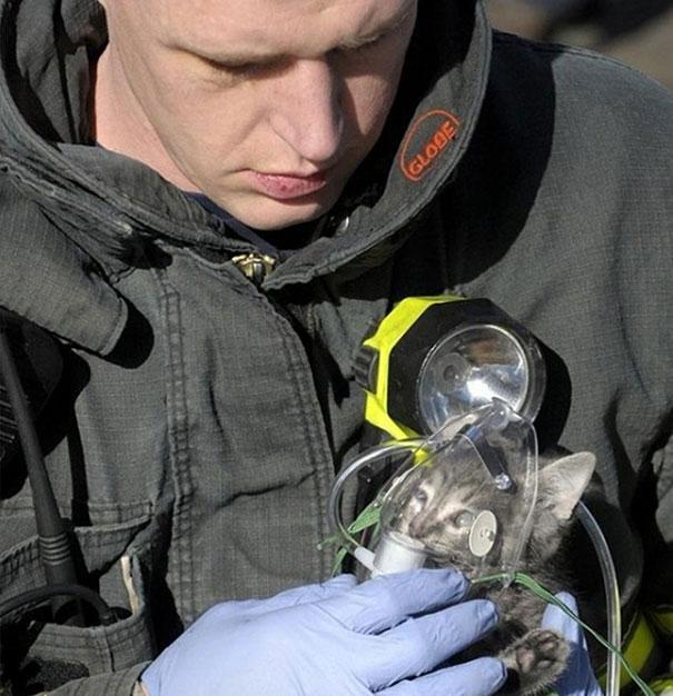 Người lính cứu hỏa này đang cho chú mèo con vừa được cứu khỏi đám cháy thở oxy.