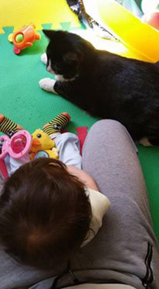 Cô mèo làm bảo mẫu cho cậu chủ nhỏ từ khi chưa chào đời