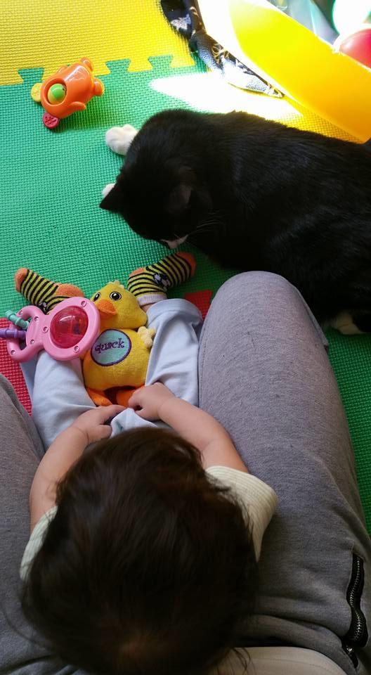 Ngay cả lúc Sean chơi đùa bên mẹ mình, Panda cũng không khi nào rời mắt khỏi cậu chủ nhỏ.