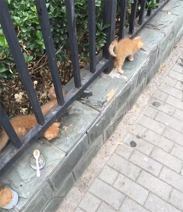 Không yêu thương cũng xin đừng tổn thương những con vật bé nhỏ!