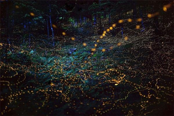 Dàn đèn nhân tạo không thể nào cho ta được thứ ánh sáng huyền diệu này.
