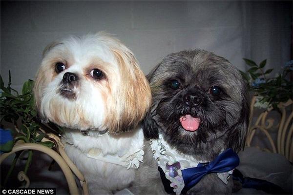 Hai nhân vật chính của đám cướinày. (Ảnh: Internet)