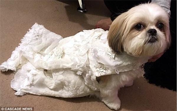 Bellaxinh đẹp trong đám cưới của mình.(Ảnh: Internet)