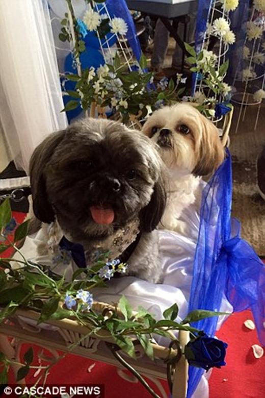 Hai chú chó hạnh phúc ngời ngời trong lễ cưới khủng của mình