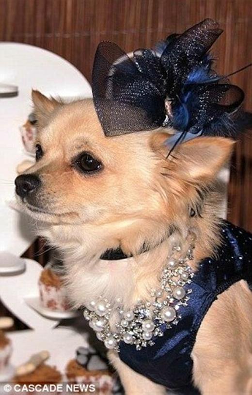Rất nhiều khách đã tới dự đám cưới của hai chú chó này. (Ảnh: Internet)