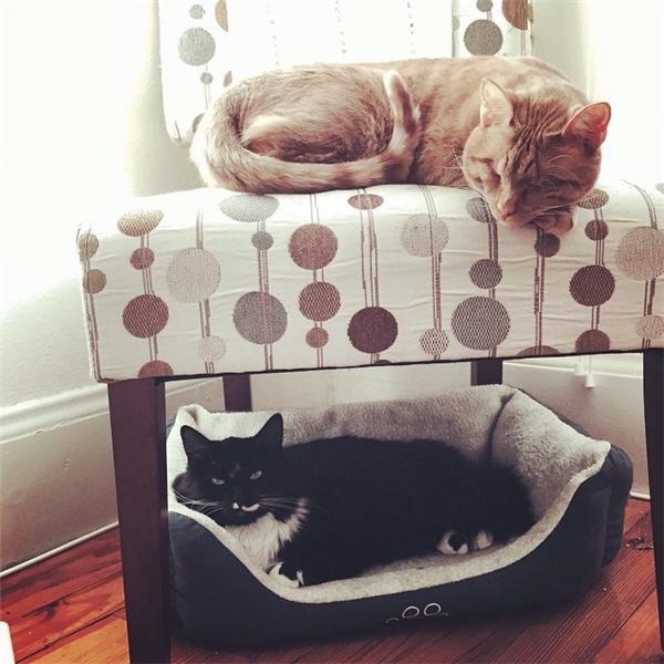 Ngoài Dillon, họ còn nuôi thêm hai chú mèo khác nữa, và cả hai đều rất yêu quý Dillon, xem chú như em ruột của mình.