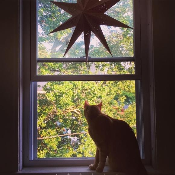 Dillon có thể ngồihàng giờ bên bậu cửa sổ và cảm nhận thế giới bên ngoài.