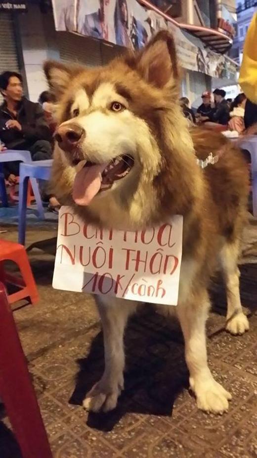 Hiển nhiên cũng không thể bỏ sót hai em cún siêu đáng yêu đi giúp chủ bán hoa kiếm cơm này rồi.