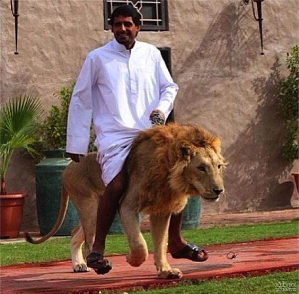 Hình ảnh các đại gia chơi đùa với những loài thú dữ thế này là không hiếm.