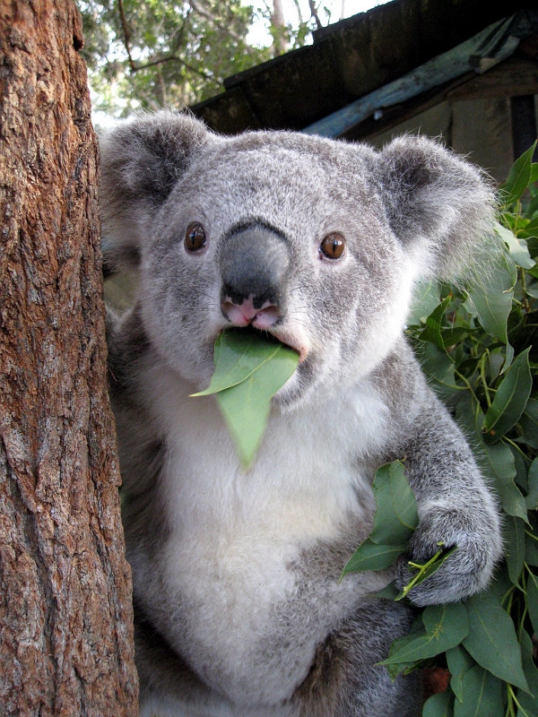 Nếu một ngày em phát hiện ra lá cây có phun thuốc trừ sâu...