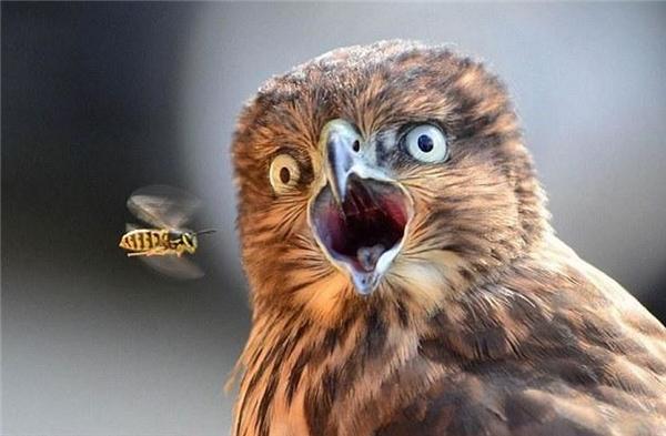 """Nhưng thường thì người ta sẽ chọn""""hú hồn chim cú"""" làm điển hình."""