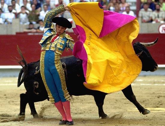 Những hình ảnh đẫm máu của môn đấu bò tại Tây Ban Nha
