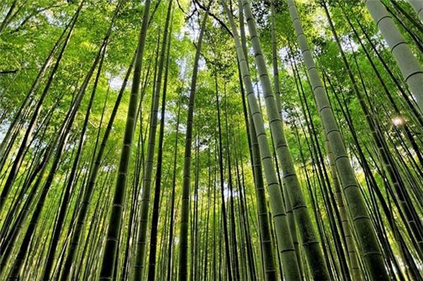 """Du lịch thế giới - Những khu rừng """"lạ thường"""" nhất trên thế giới ngỡ chỉ có trong cổ tích"""