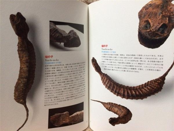 Bí ẩn về sinh vật huyền bí nhất Nhật Bản