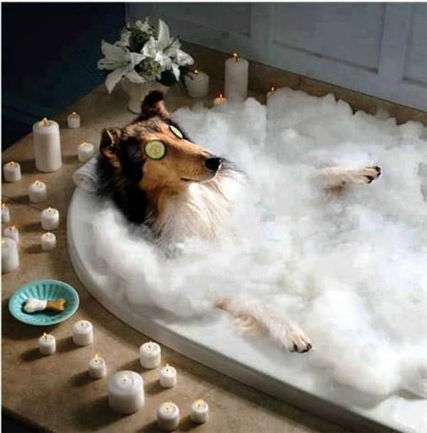 Ai không biết sẽ tưởng mỗi khi đi tắm, cún cưng sẽ thích thú và tận hưởng như thế này.