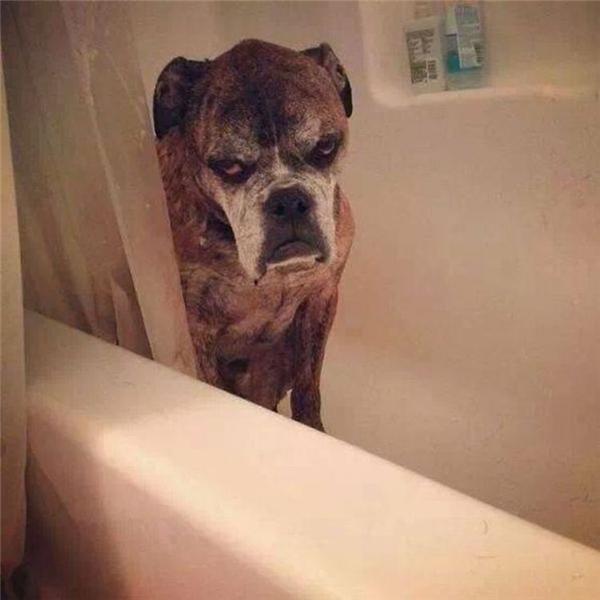 Trời ơi sao mà ngày nào cũng tắm. Tắm chi mà tắm lắm thế không biết.