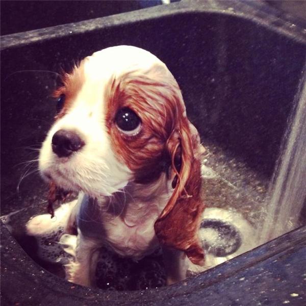 Tại sao? Tại sao lại dội nước ướt hết cả người tôi thế này?