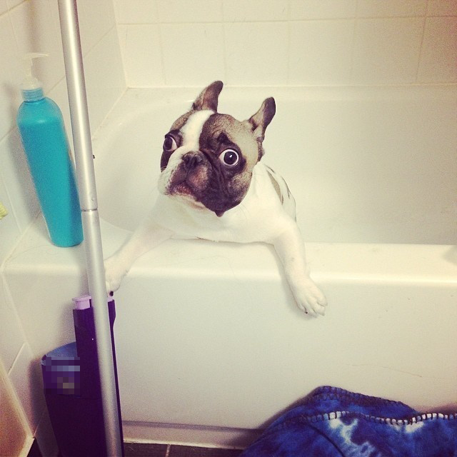Trời ơi lại tắm nữa hả, hôm nay con đâu có chơi bẩn đâu mà sao phải tắm?