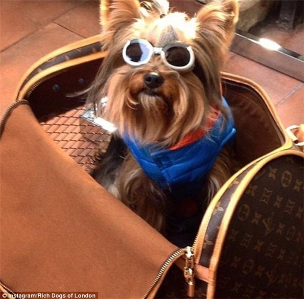Chiếc túi LV đắt tiền là vật phẩm không thể thiếu của bất cứ chú chó giàu sang sành điệu nào cho một kì nghỉ hè tuyệt vời đấy. (Nguồn IG Rich Dogs of London)