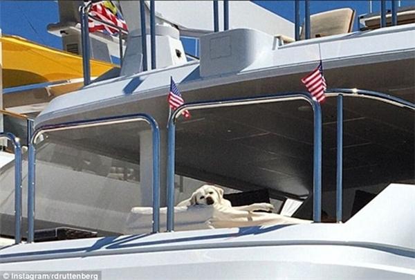 """Một giấc ngủ trưa trên du thuyền chính là ước mơ của bao người, nhưng với chú chó thuộc giống Labrador này thì chỉ là """"chuyện thường tình thế thôi"""". (Nguồn IG rdrttenberg)"""