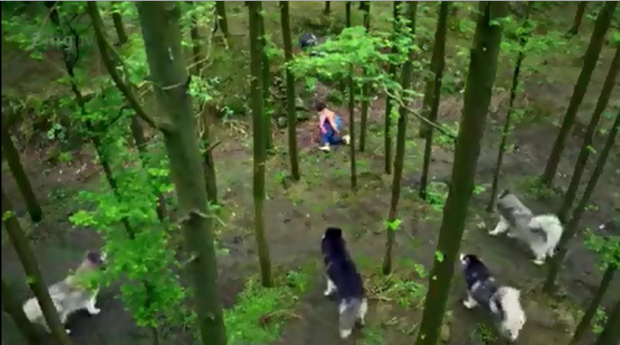 Bị đàn sói bao vây, cậu bé sẽ làm gì? (Ảnh: Cắt từ clip)