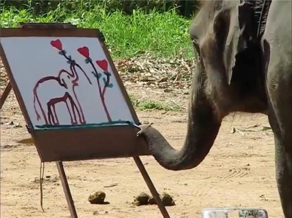 Hình ảnh lung linh của khách du lịch thường thấy ở những con voi du lịch ở Thái. Liệu chúng có như là mơ? (Ảnh: Internet)