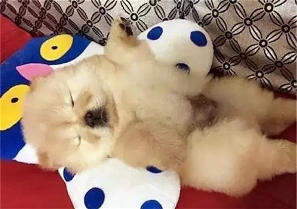 Khi ngủ thì cũng chẳng thèm ý tứ gì cả.