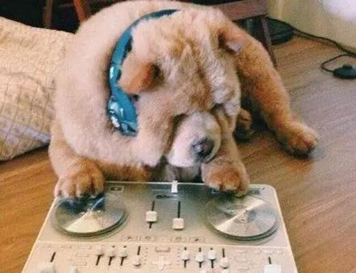 Chow Chow còn có tài DJ nữa đấy.