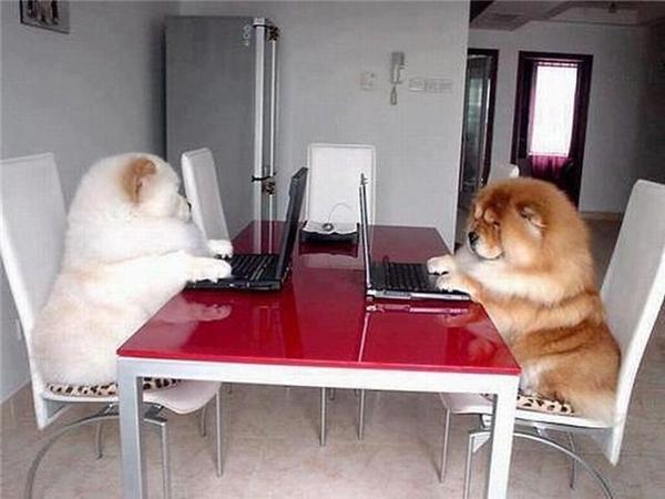 """Trông tướng chúng nó ngồi """"tán gái"""" trên mạng kìa, chiếm hết cả diện tích mặt ghế."""